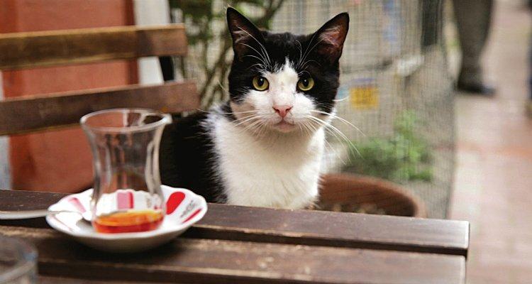kedi-belgesli-2